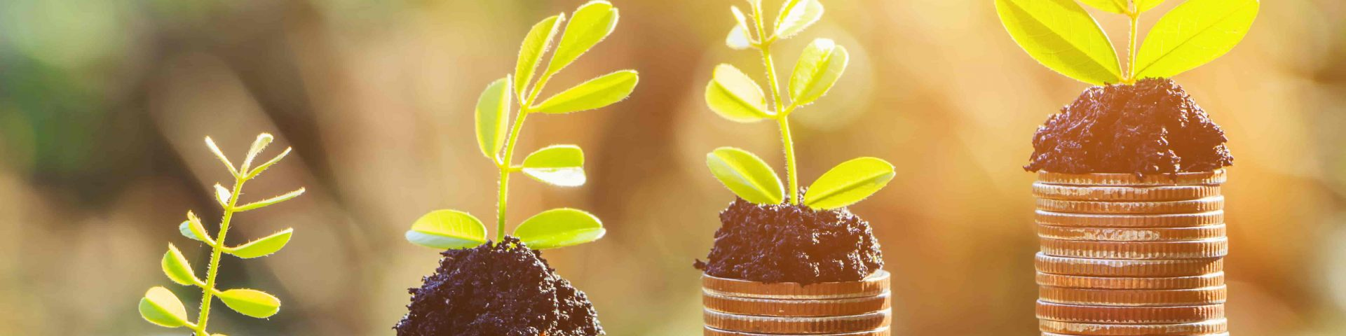 corporate social investment